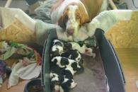 30 03 2013 Puppies